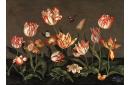 Nature morte aux tulipes
