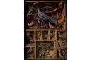 Réunion d'oiseaux étrangers placés dans différentes caisses