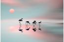 Family flamingos