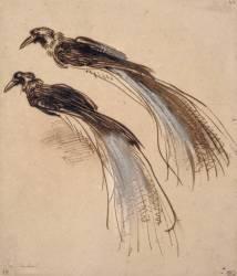Deux études pour un oiseau de paradis (Rembrandt) - Muzeo.com