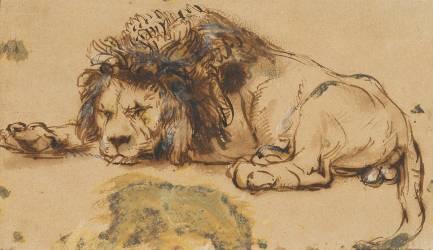 Reproductions D Art Dessin Lion Cadre Tableau Muzeo