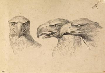 Trois têtes d'aigles (Charles Le Brun) - Muzeo.com