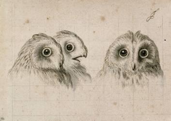 Trois têtes d'hommes en relation avec le chat-huant (Le Brun Charles) - Muzeo.com