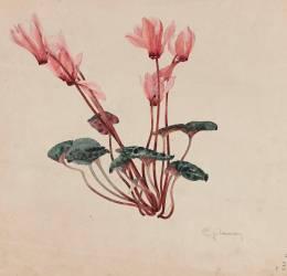 Cyclamen (Emile Gallé) - Muzeo.com