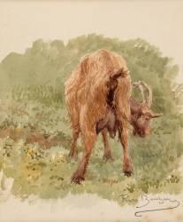 Etude de chèvre (Rosa Bonheur) - Muzeo.com