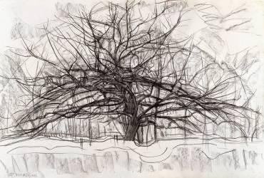 Etude pour l'arbre gris (Mondrian Piet) - Muzeo.com
