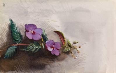 Fleurs (Anonyme) - Muzeo.com