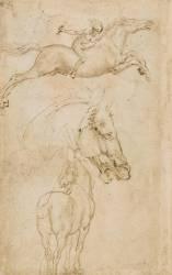 Tête de cheval, vue de la croupe d'un cheval (De Vinci Léonard) - Muzeo.com
