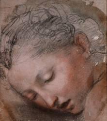 Tête de femme (Barocci Federico dit Le...) - Muzeo.com