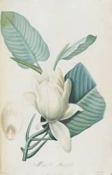 Description des plantes rares que l'on cultive à Navarre et à Malmaison (Pierre Joseph Redouté) - Muzeo.com