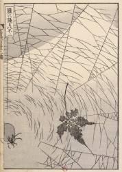 Le Mont Fuji vu à travers une toile d'araignée (Hokusai) - Muzeo.com