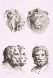 Planches 26 a et 26 b : deux têtes de lions et trois têtes d'hommes en relation avec le lion (Charles Le Brun) - Muzeo.com