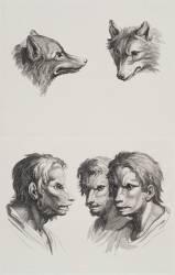 Planches 27 a et 27 b : deux têtes de loups et trois têtes d'hommes en relation avec le loups (Charles Le Brun) - Muzeo.com
