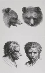 Planches 29 a et 29 b : deux têtes d'ours et deux têtes d'hommes en relation avec l'ours (Le Brun Charles) - Muzeo.com