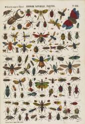 Histoire naturelle : insectes (anonyme) - Muzeo.com
