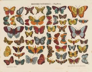 Histoire naturelle : papillons (Anonyme) - Muzeo.com