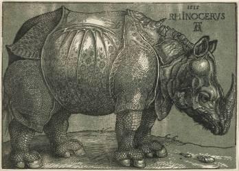 Le Rhinocéros (Albrecht Dürer) - Muzeo.com