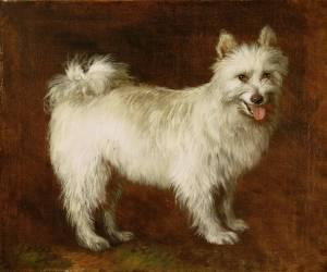 Loulou de Poméranie (Thomas Gainsborough) - Muzeo.com