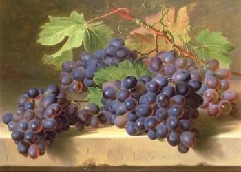 Nature Morte de Grappes reposant sur un Rebord en Marbre (Gérard van Spaendonck) - Muzeo.com