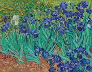 Iris. (Vincent Van Gogh) - Muzeo.com