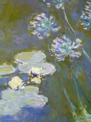 Nympheas et Agapanthus. Peint a Giverny. (Claude Monet) - Muzeo.com
