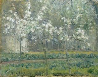 Printemps. Pruniers en fleurs, dit : Potager, arbres en fleurs, printemps, Pontoise (Pissarro Camille) - Muzeo.com