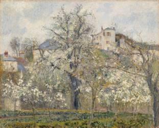 Printemps. Pruniers en fleurs (Camille Pissarro) - Muzeo.com