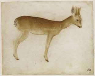 Chevreuil vu de profil tourné à droite (Pisanello (dit), Pisano...) - Muzeo.com