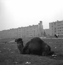 Genneviliers – 1963 (Gérald Bloncourt) - Muzeo.com