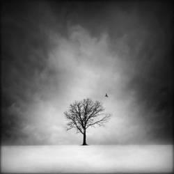 Arbre solitaire, paysage d'hiver (George Disario) - Muzeo.com