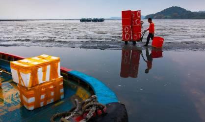Baie de Shenzhen (Audebert Christophe) - Muzeo.com