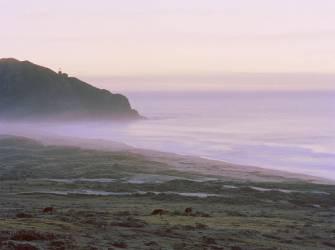 Big Sur (Carli Choi) - Muzeo.com