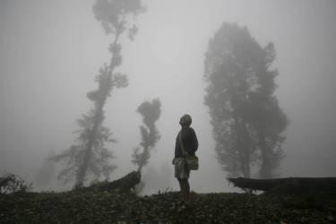 Brume et arbres à Darjeeling, Bengal-Occidental, Inde (Timothy Allen) - Muzeo.com