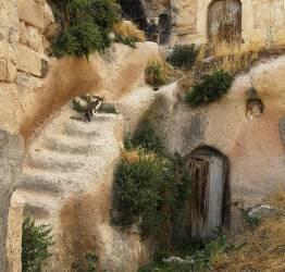 Chat grimpant les marches dans un cadre inhabituel (Pat Swain) - Muzeo.com