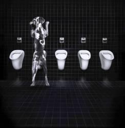 Chien urinant dans les toilettes, vue de dos (anonyme) - Muzeo.com