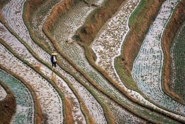 IN*Chine, province de Guangxi, rizière (Meniconzi Alessandra) - Muzeo.com