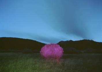 Peinture nocturne (Carli Choi) - Muzeo.com
