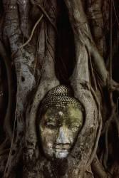 Tête de Bouddha dans les racines des arbres de banian au Wat Mahathat (Bruno Ehrs) - Muzeo.com