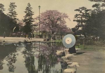 Une femme regardant le reflet de cerisiers en fleurs dans un petit étang (Kiyoshi Sakamoto) - Muzeo.com