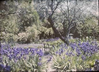Beaulieu, villa Salles, jardin japonais (anonyme) - Muzeo.com