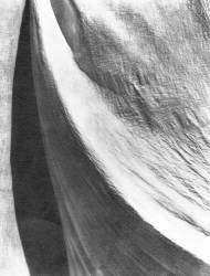 Etoffe (Tina Modotti) - Muzeo.com