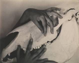 Georgia O'Keeffe — Mains et crâne de cheval (Alfred Stieglitz) - Muzeo.com