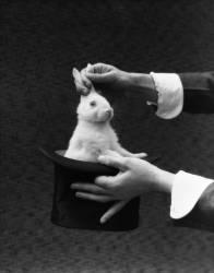 Mains de magicien sortant un lapin d'un chapeau (Roberts H. Armstrong) - Muzeo.com