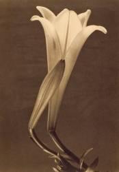 No. 1. (Tina Modotti) - Muzeo.com