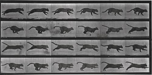 Album sur la décomposition du mouvement: chat (Eadweard Muybridge) - Muzeo.com