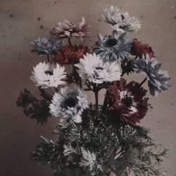 Anemones (Arthur E. Morton) - Muzeo.com