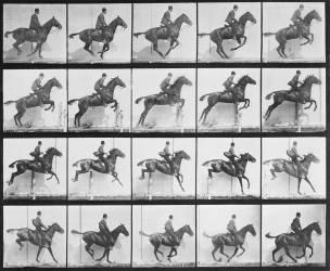 Animal Locomotion : Cavalier sautant par-dessus une clôture (Eadweard Muybridge) - Muzeo.com
