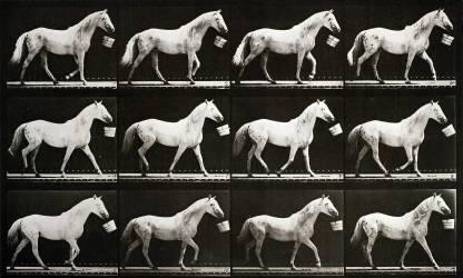 Animal Locomotion : Cheval marchant avec un seau (Eadweard Muybridge) - Muzeo.com