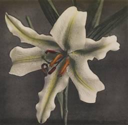 Lys (Ogawa Kazumasa) - Muzeo.com