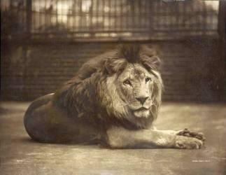 Portrait of Majesty (Bolton Gambier) - Muzeo.com